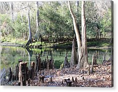Lighted Springs Acrylic Print by Michelle Barone