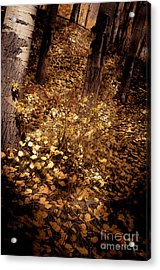 Acrylic Print featuring the photograph Lighting The Way by The Forests Edge Photography - Diane Sandoval