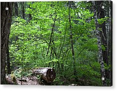 Lighting Up My World Forest Photography By Omashte Acrylic Print by Omaste Witkowski