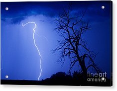 Lightning Tree Silhouette Acrylic Print by James BO  Insogna