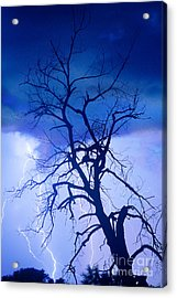 Lightning Tree Silhouette Portrait Acrylic Print by James BO  Insogna
