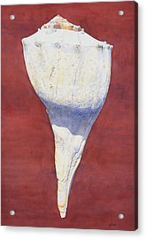Lightning Whelk Conch II Acrylic Print