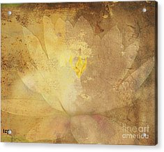 Acrylic Print featuring the photograph Lights On Lily by Traci Cottingham