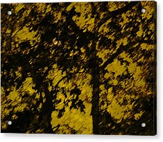 Lighttthru Forest Acrylic Print by Florene Welebny
