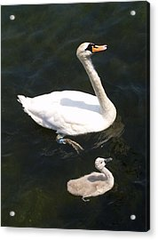 Like Father Like Son Acrylic Print by Michael Canning
