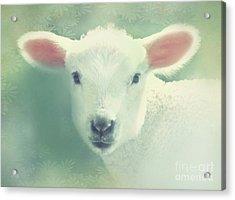 Lil Lamb Acrylic Print by KaFra Art