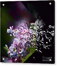 Lilac 2 Acrylic Print
