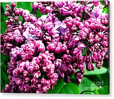 Acrylic Print featuring the photograph Lilac Blossoms Abstract Soft Effect 1 by Rose Santuci-Sofranko