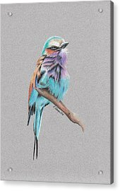 Lilac Breasted Roller Acrylic Print by Gary Stamp