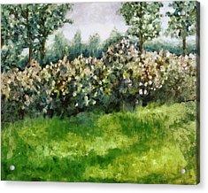 Lilac Bushes In Springtime Acrylic Print