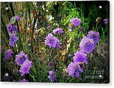 Lilac Carved Jellytot Acrylic Print