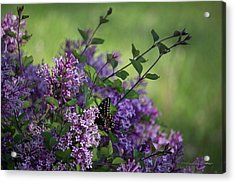 Lilac Enchantment Acrylic Print by Karen Casey-Smith
