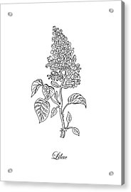 Lilac Flower Botanical Drawing Black And White Acrylic Print