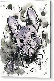 Lilac Frenchie Acrylic Print