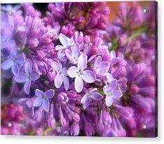 Lilac Acrylic Print by Jessica Jenney