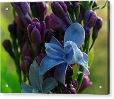 Lilac Acrylic Print by Juergen Roth