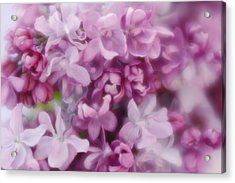 Acrylic Print featuring the photograph Lilac - Lavender by Diane Alexander