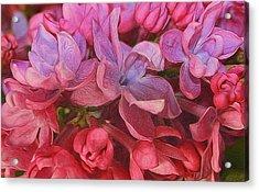 Lilac Blush Acrylic Print