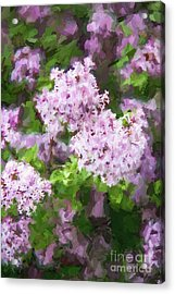 Lilac Lovelies Acrylic Print by A New Focus Photography