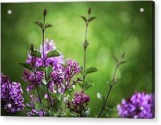Lilac Memories Acrylic Print by Karen Casey-Smith