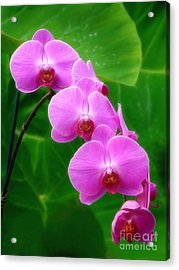 Lilac Orchid Beauties Acrylic Print by Sue Melvin