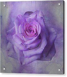 Lilac Purple Rose Acrylic Print