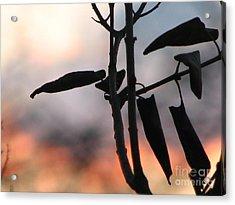 Lilac Sunset Acrylic Print by Roxy Riou