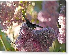 Lilac World Acrylic Print