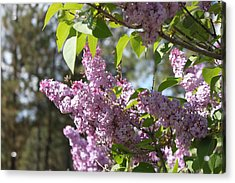Acrylic Print featuring the photograph Lilacs 5545 by Antonio Romero