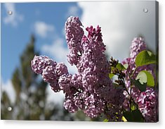 Acrylic Print featuring the photograph Lilacs 5547 by Antonio Romero