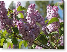 Acrylic Print featuring the photograph Lilacs 5548 by Antonio Romero