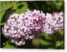 Acrylic Print featuring the photograph Lilacs 5549 by Antonio Romero