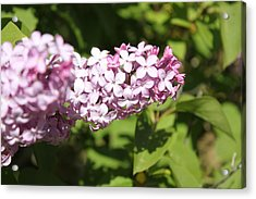 Acrylic Print featuring the photograph Lilacs 5550 by Antonio Romero