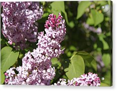 Acrylic Print featuring the photograph Lilacs 5552 by Antonio Romero