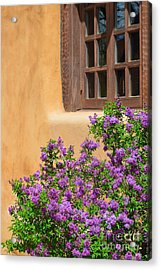 Lilacs And Adobe Acrylic Print by Catherine Sherman