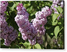 Acrylic Print featuring the digital art Lilacs by Antonio Romero