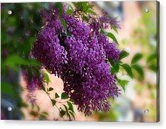 Lilacs Acrylic Print by Elaine Manley