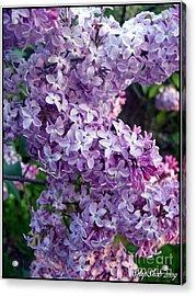 Lilacs Acrylic Print by Emily Kelley