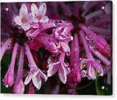 Acrylic Print featuring the photograph Lilacs In Rain by Marilynne Bull