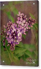 Lilacs Acrylic Print by Krista-