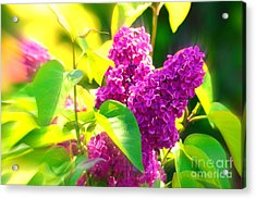 Acrylic Print featuring the photograph Lilacs by Susanne Van Hulst