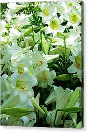 Lilies 11 Acrylic Print by Anna Villarreal Garbis