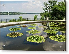Lilies And The Lake Acrylic Print by Allen Sheffield