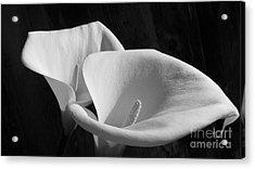 Lilies Bw Acrylic Print