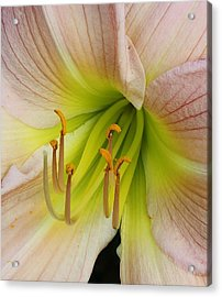 Lilies Delight Acrylic Print by Bruce Bley