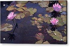 Lilies II - Water Lilies Acrylic Print