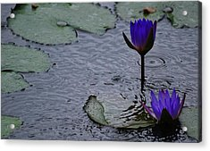 Acrylic Print featuring the photograph Lilies In The Rain by Amee Cave