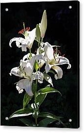 Lilies In The Sun Acrylic Print
