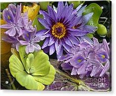 Lilies No. 38 Acrylic Print