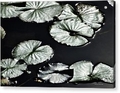Lilies Of The Deep Acrylic Print